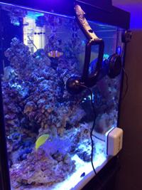 Reef Tank Cam
